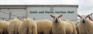 auction mart